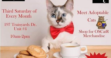 Coffee With Cats @ Pet Valu Trainyards